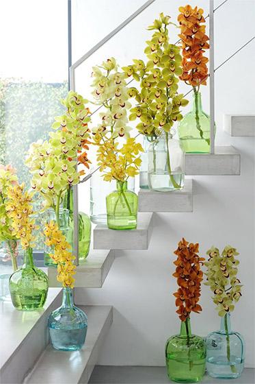 Inspiration_Cymbidium_Orchids_Flowercouncil-of-Holland